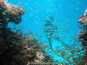 My diving buddy came into the frame with a shoal of fishes by Svetoslav Dimitrov 
